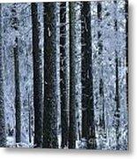 Forest In Winter Metal Print by Bernard Jaubert