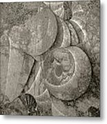 Fossilized Shell - B And W Metal Print by Klara Acel