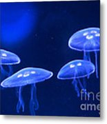 Four Blue Moon Jellyfish Metal Print by Artist and Photographer Laura Wrede