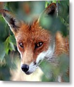 Fox Through Trees Metal Print by Tim Gainey