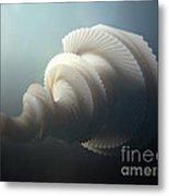 Fractal Seashell  Metal Print by Pixel  Chimp