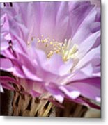 Fragile Beauty Metal Print by Deb Halloran