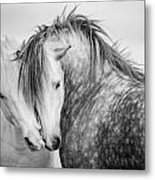 Friends II Metal Print by Tim Booth