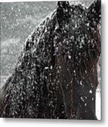 Friesian Snow Metal Print by Fran J Scott