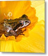 Frog And Daffodil Metal Print by Jean Noren