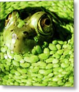 Frog Eye's Metal Print by Optical Playground By MP Ray