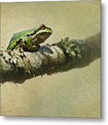 Frog Up A Tree Metal Print by Angie Vogel