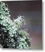 Frosted Moss Metal Print by Mary Katherine Powers