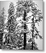 Frozen Beauty Metal Print by Betty Depee