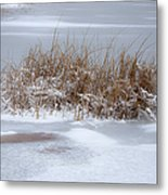 Frozen Reeds Metal Print by Julie Palencia