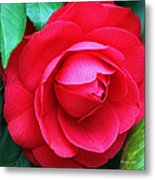 Fuchsia Camellia In Pastel Metal Print by Suzanne Gaff