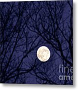 Full Moon Bare Branches Metal Print by Thomas R Fletcher