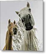Funny Horses Metal Print by Cindy Bryant