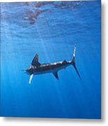 Galapagos Beauty Metal Print by Monique Comfort
