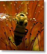 Gathering Nectar Metal Print by Camille Lopez