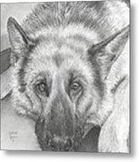 German Shepherd Metal Print by Heather Gessell