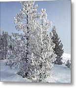 Ghost Trees Of Yellowstone Metal Print by Sandra Bronstein