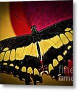 Giant Swallowtail Butterfly Metal Print by Elena Elisseeva