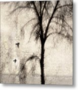 Glimpse Of A Coastal Pine Metal Print by Carol Leigh
