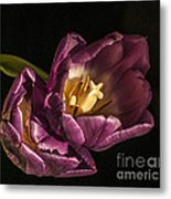 Glowing Glory Metal Print by Terry Rowe
