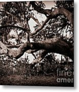 Gnarly Limbs At The Ashley River In Charleston Metal Print by Susanne Van Hulst