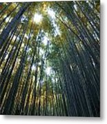 Golden Bamboo Forest Metal Print by Aaron S Bedell