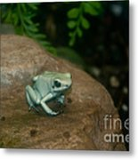 Golden Poison Frog Mint Green Morph Metal Print by Mark Newman