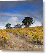 Golden Vines Metal Print by Mike  Dawson