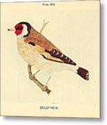 Goldfinch Metal Print by Philip Ralley