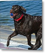 Good Boy Metal Print by Fraida Gutovich