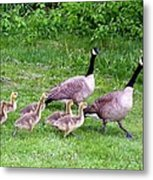 Goose Step Metal Print by Will Borden