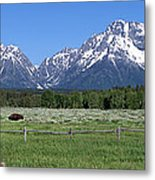 Grand Teton Buffalo Metal Print by Brian Harig