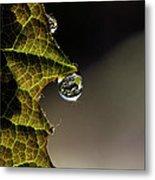 Grape Leaf With Rain Drop Metal Print by Cindi Ressler