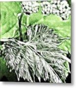 Grape Vine Leaf Metal Print by Odon Czintos