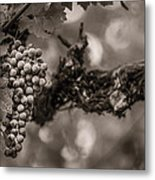Grapes In Grey 1 Metal Print by Clint Brewer