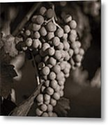 Grapes In Grey 2 Metal Print by Clint Brewer