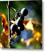 Grapes On The Vine No.2 Metal Print by Neal  Eslinger