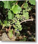 Grapevine. Burgundy. France. Europe Metal Print by Bernard Jaubert