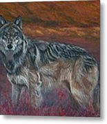 Gray Wolf Metal Print by Tom Blodgett Jr