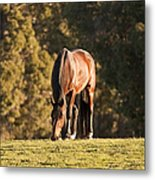 Grazing Horse At Sunset Metal Print by Michelle Wrighton