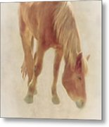 Grazing Time Metal Print by Tom York Images