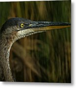 Great Blue Profile Metal Print by Ernie Echols