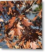 Great Falls Va - 121227 Metal Print by DC Photographer
