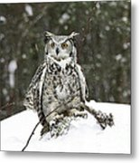 Great Horned Owl In A Winter Snow Storm Metal Print by Inspired Nature Photography Fine Art Photography