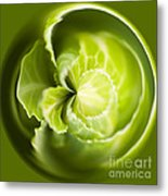 Green Cabbage Orb Metal Print by Anne Gilbert