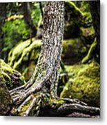 Green Forest Metal Print by Aaron Aldrich
