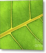 Green Leaf Close Up Metal Print by Elena Elisseeva