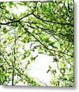 Green Leaves Metal Print by Blink Images