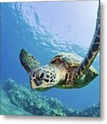 Green Sea Turtle - Maui Metal Print by M Swiet Productions