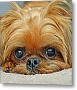 Griff Metal Print by Lisa Phillips